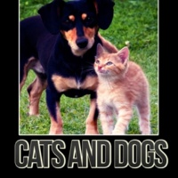 Cats Music Zone Cats and Dogs - Instrumental Mellow Music and Calming Down Nature Sounds to Relax Your Dog & Cat When They Are Alone at Home, Soft Melodies for Puppies & Kittens That Will Keep Them Company