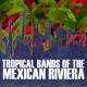 Los Principes del Tropico La Margarita
