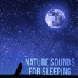 Flute Music Ensemble Nature Sounds for Sleeping
