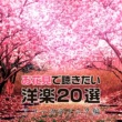 magicbox お花見で聴きたい洋楽20選~アコースティック編