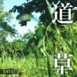 TATU 道草