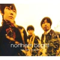 northern bright WILDFLOWER