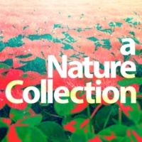 Nature Sound Collection Green Field