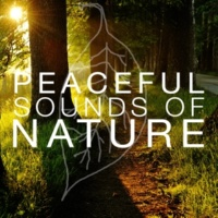 Sounds of Nature! Peaceful Sounds of Nature