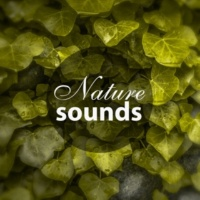 Feeling Good Club Nature Sounds ‐ New Age Relaxation, Soft Music to Help You Relax, Nature Music for Better Day