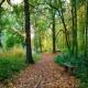 Jule Don Walk in the Woods