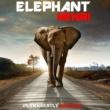 HENRI Elephant