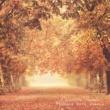 Charlotte Perrelli Höstens sista blomma