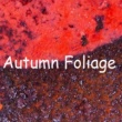 YOJI Autumn Foliage