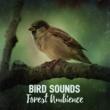 Calm Bird Sounds