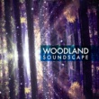 Forest Soundscapes