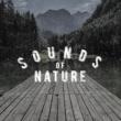 Mediation Sounds of Nature