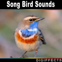 Digiffects Sound Effects Library Many Birds Singing with Insects Version 1