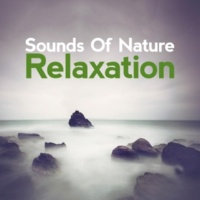 Sounds of Nature Relaxation Brook Bird Song