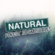 Natural Forest Sounds Natural Forest: Soundscapes