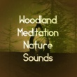 Deep Sleep Meditation Woodland Meditation: Nature Sounds