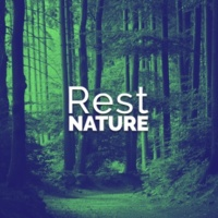 Rest & Relax Nature Sounds Artists Woodland Brook