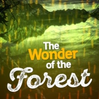 Natural Forest Sounds Birds at the Water's Edge