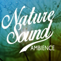 Nature Sound Ambience Streams Flowing