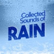 Rain Sounds Nature Collection Collected Sounds of Rain