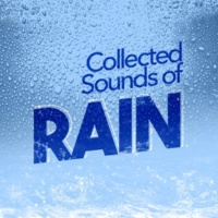 Rain Sounds Nature Collection Morning Raindrops