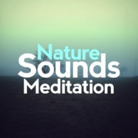 Nature Sounds Meditation Trickle Through the Forest