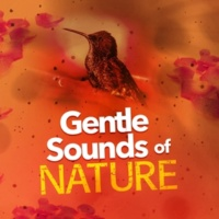 Nature Sounds Therapy Garden Rill