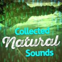 Nature Sound Collection Life at the Start of the Stream