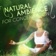 Natural Concentration Sounds Natural Ambience for Concentration