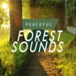 Forest Sounds Evening Song