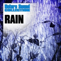 Nature Sound Collection Steady Rain with Runoff Spilling onto Pavement