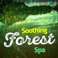 Forest Sounds Relaxing Spa Music Singing Birds Fountain Birds