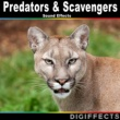 Digiffects Sound Effects Library Predators & Scavengers Sound Effects