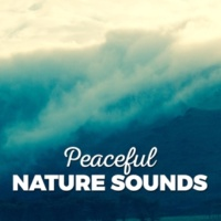 Ambient Nature Sounds Water