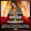Varios Artistas Serenata a la Virgen de Guadalupe