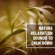 Calming Sounds Sanctuary Nature Relaxation Sounds to Calm Down ‐ Soft New Age Music, Water Waves, Rainfall, Soothing Sounds
