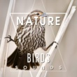 Echoes of Nature Nature Birds Sounds ‐ Calming Sounds, Singing Birds, Sounds of Forest, Rest a Bit, Free Time