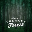 Nature Sounds Therapy Life at the Start of the Stream