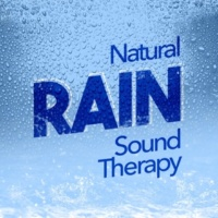 Natural Rain Sounds Light Shower Window
