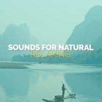 Sounds of Nature Relaxation Wings