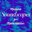 Sounds of Nature for Deep Sleep and Relaxation Evening Birds