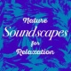 Sounds of Nature for Deep Sleep and Relaxation Calm Coppice