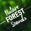 Natural Forest Sounds Nature Forest Sounds