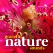 Relaxing Nature Ambience Graceful Nature Sounds