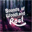 Dreams of Nature Sounds of Woodland Rest