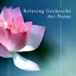 Spa & Relaxation & Relaxing Sounds of Nature White Noise for Mindfulness Meditation Relaxation Music Club & Water Music College Relaxing Geräusche der Natur mit weißem Rauschen für Achtsamkeit Meditation und Entspannung