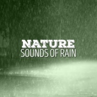 Sounds of Nature White Noise Sound Effects Fleeting Rain