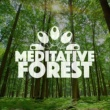Meditate to Sounds of Nature Meditative Forest