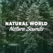 Mediation Sounds of Nature Natural World: Nature Sounds