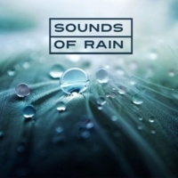 Rain Sounds Nature Collection Soft Touch